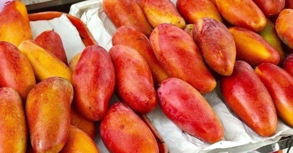 酒粕とマンゴーの相性